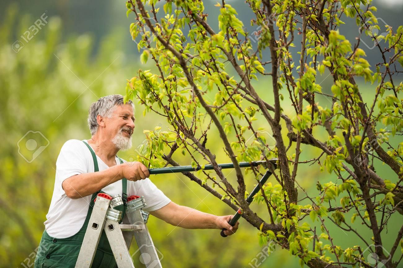 Senior man gardening in his garden (color toned image) Standard-Bild - 44973775