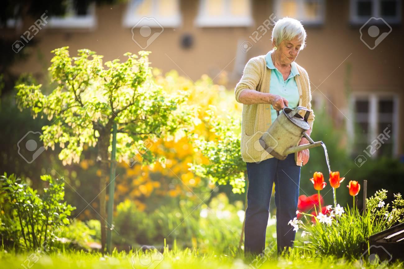 Senior woman doing some gardening in her lovely garden - watering the plants - 96444264