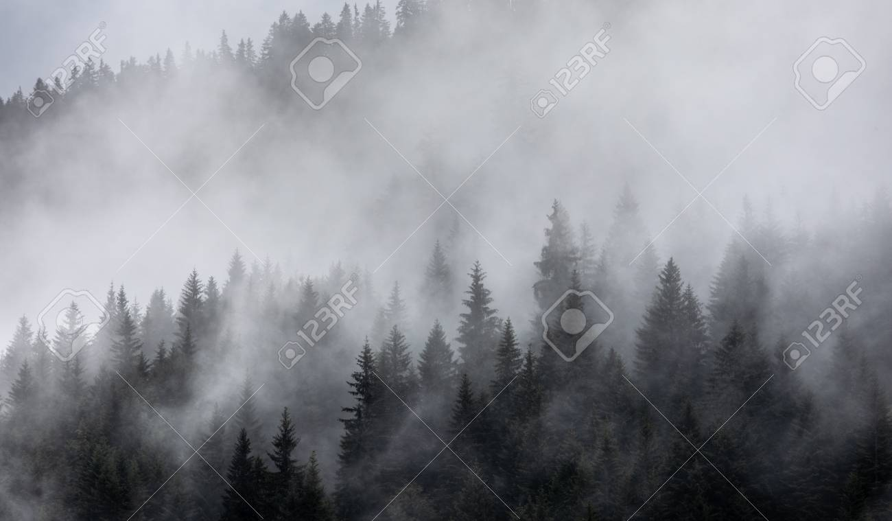 Forest in the mist as a background. Beautiful natural landscape in the summer time - 107062922
