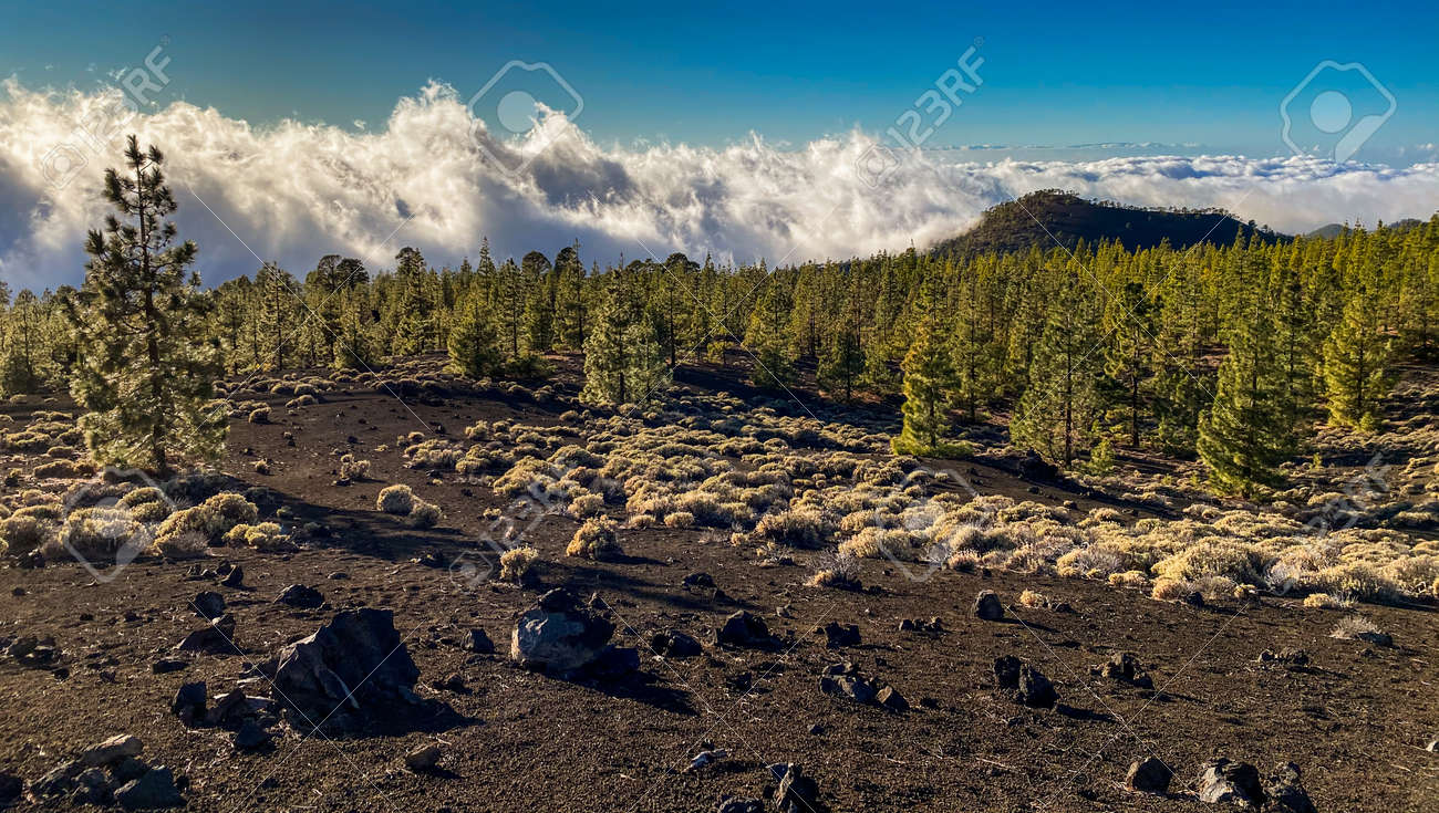 Peaks of Teide and Pico Viejo volcanoes at sunset seen from the Samara crater. Teide National Park, Tenerife, Canary Islands, Spain - 171623457