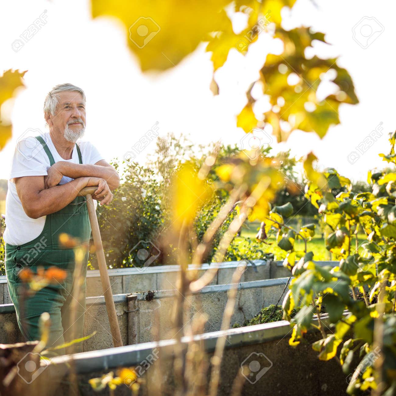 Senior gardenr gardening in his permaculture garden - 171623544