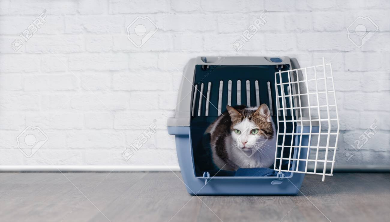 Cute old tabby cat sitting on a crate and look sideways. - 100070961