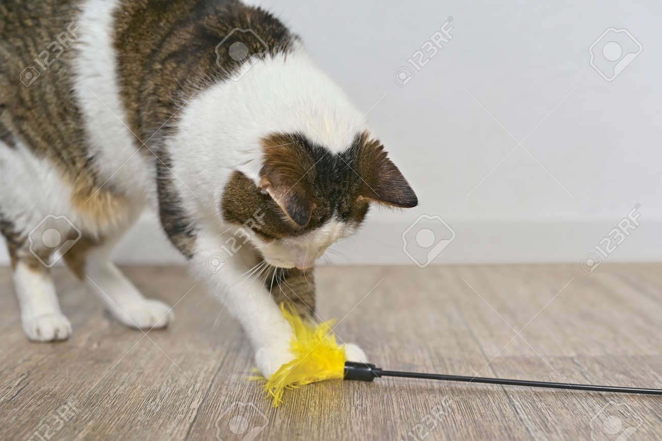 Child aged cat playing with a feather cat toy. - 164662898