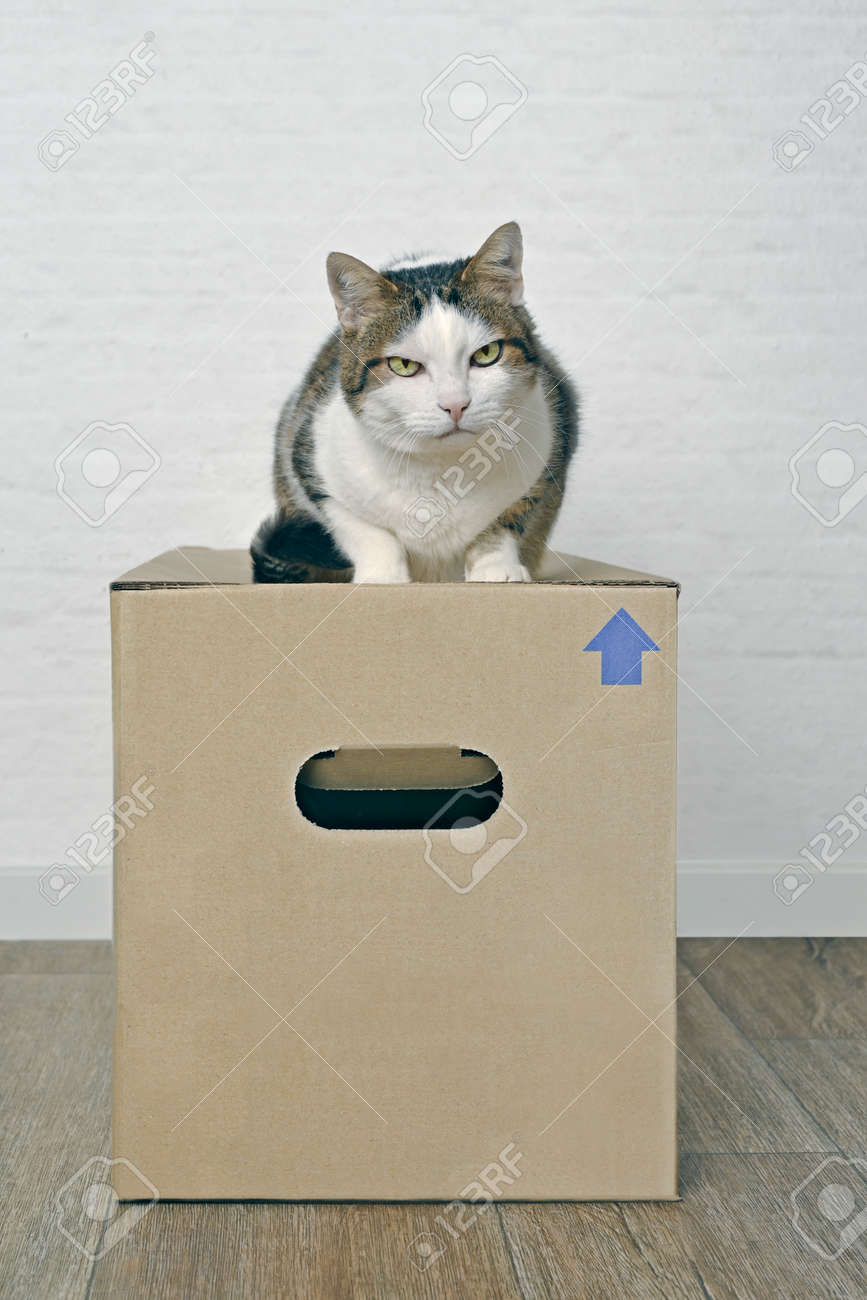 Moving with pets - Tabby cat sitting on a cardboard box. - 166193070
