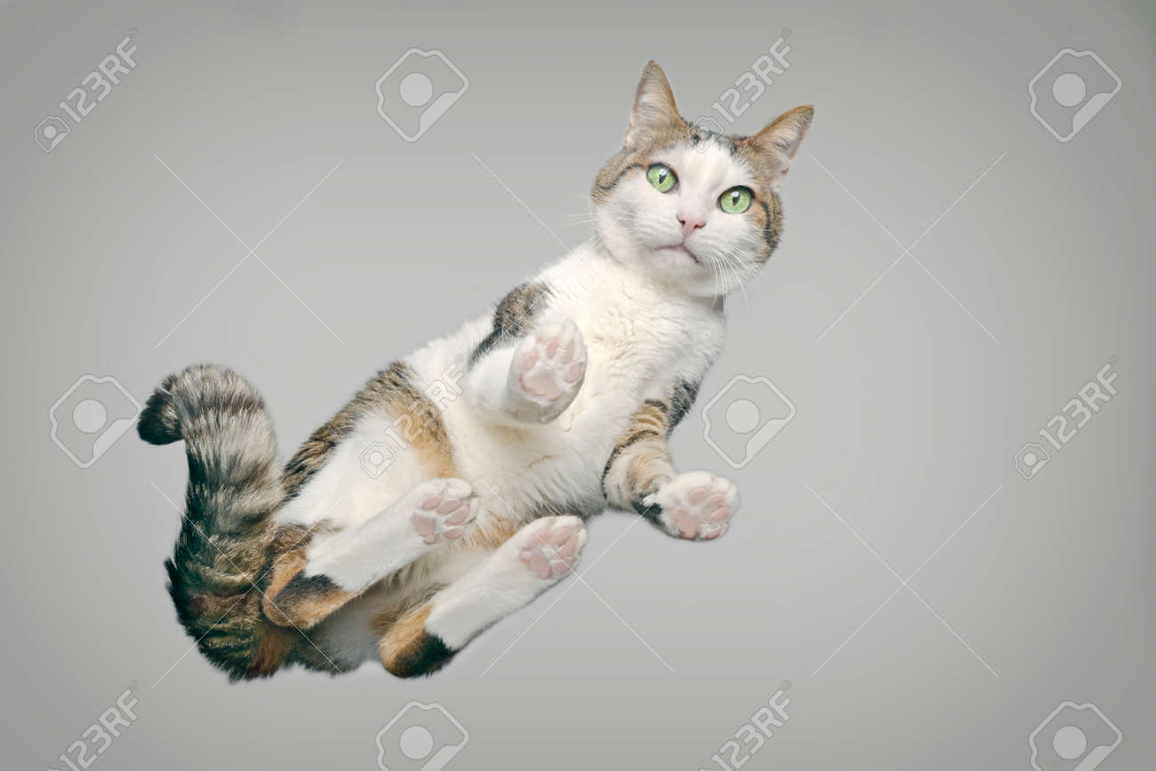 Cute tabby cat from below looking at camera. Horizontal image with gray background. - 166504047
