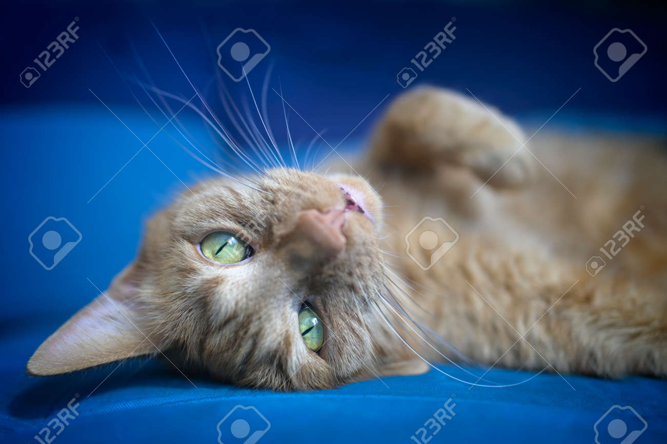 Cute red cat relaxed on the sofa looks at the camera. Horizontal image with soft focus. - 166563179