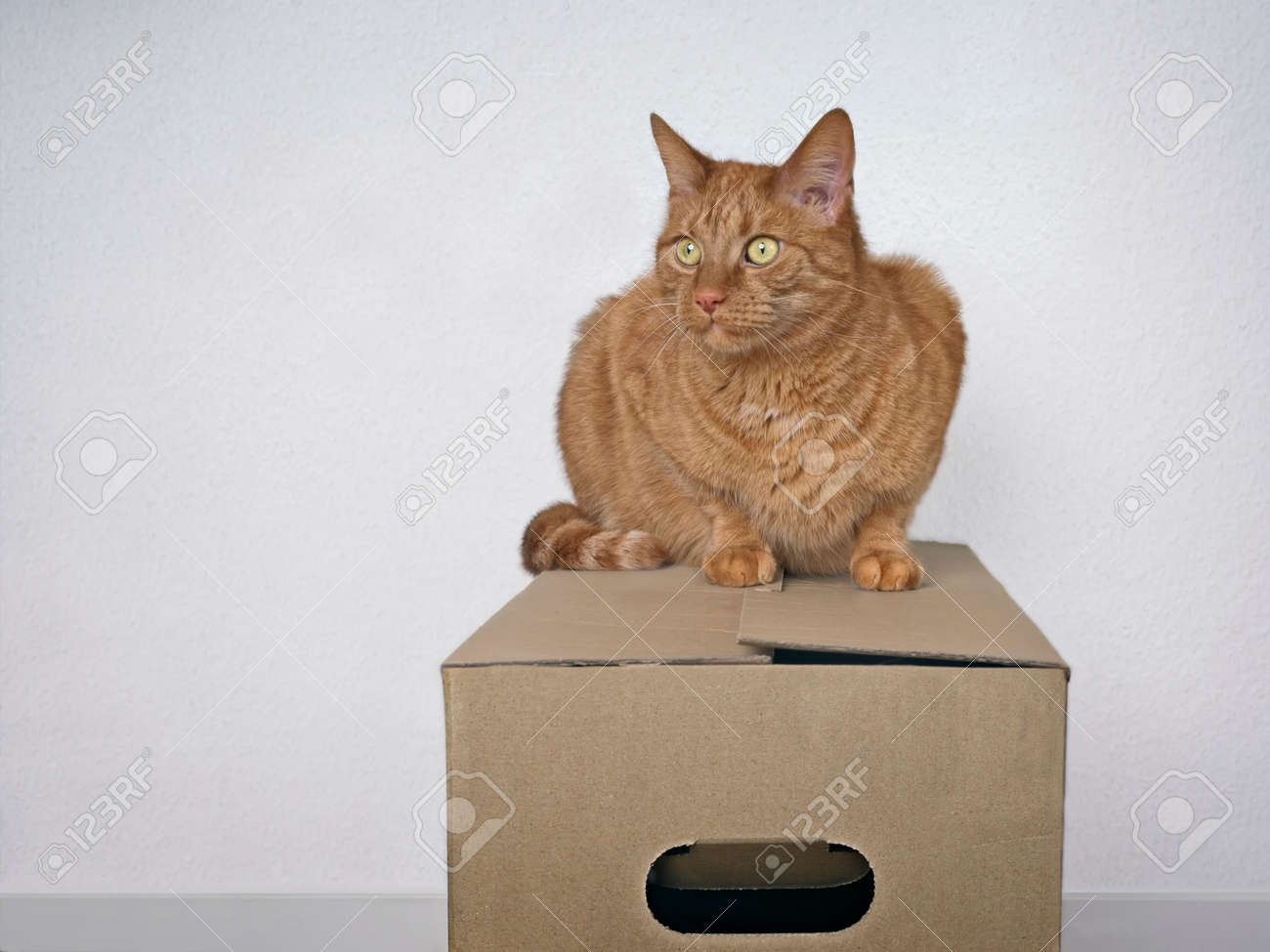 Moving with pets - Ginger cat sitting on a cardboard box and looking away. - 166979827