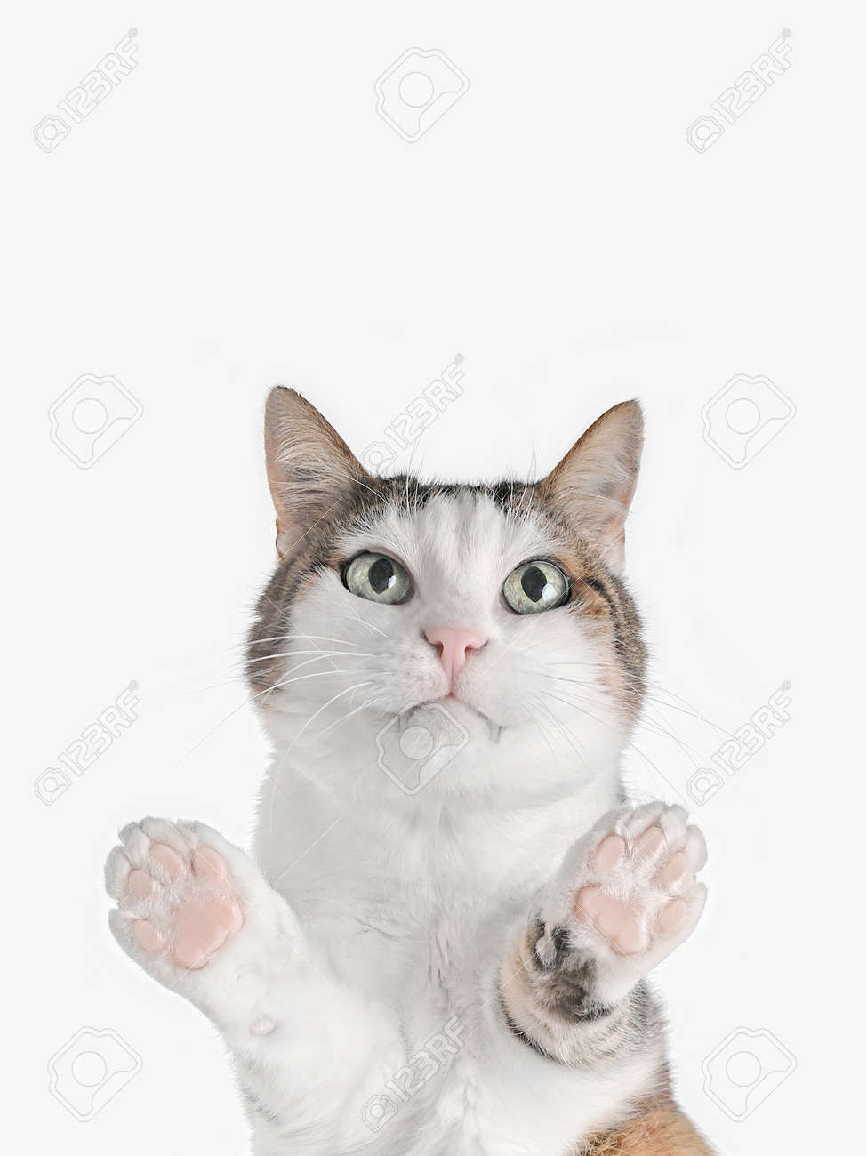 Cute tabby cat looking at camera. . Bottom view with copy space. - 168691057
