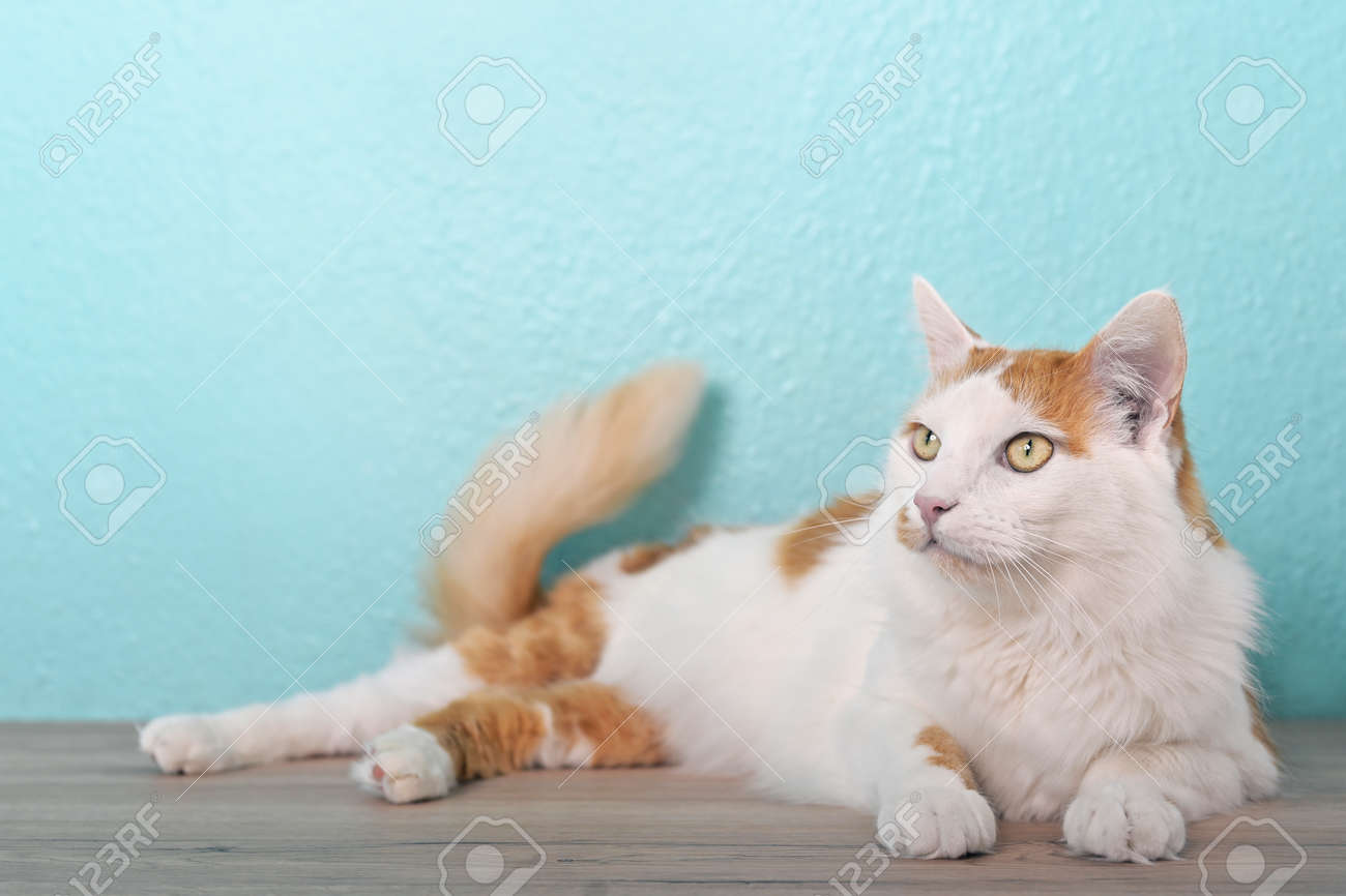 Cute tabby cat lying on the table and looking curious away. - 168691058