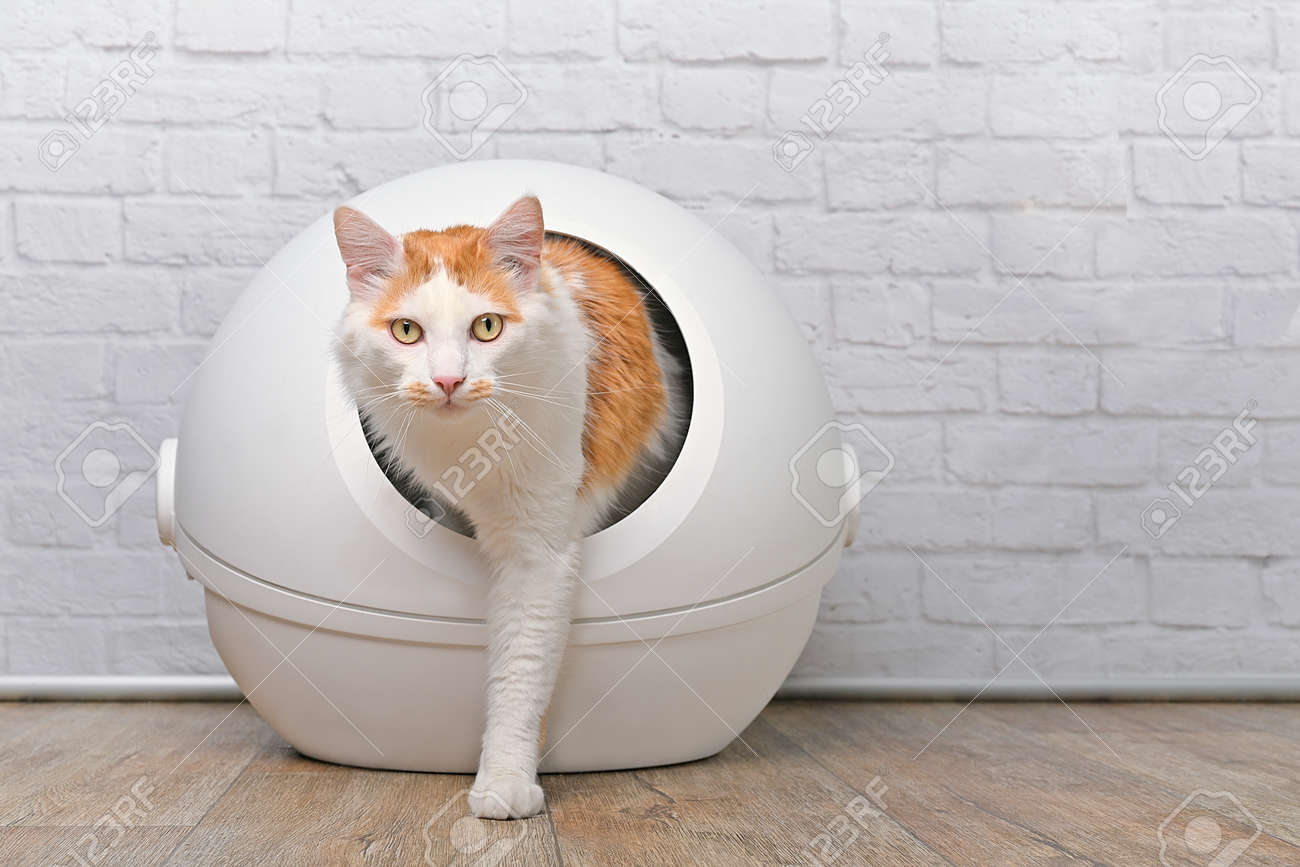 Cute tabby cat going out of a self-cleaning Litter box. Horizontal image with copy space. - 168691069