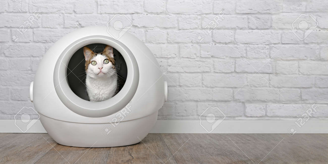 Tabby cat sitting in a self-cleaning litter box and looking curious at camera. Panoramic image with copy space. - 168691070