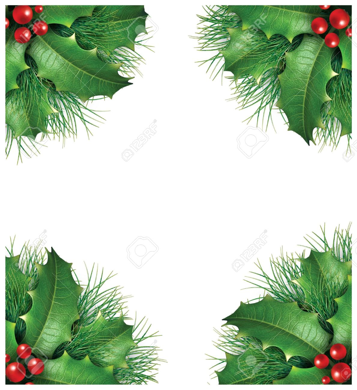 Pine Branches For Decoration Holly With Pine Branches And Red Berries For A Seasona Christmas