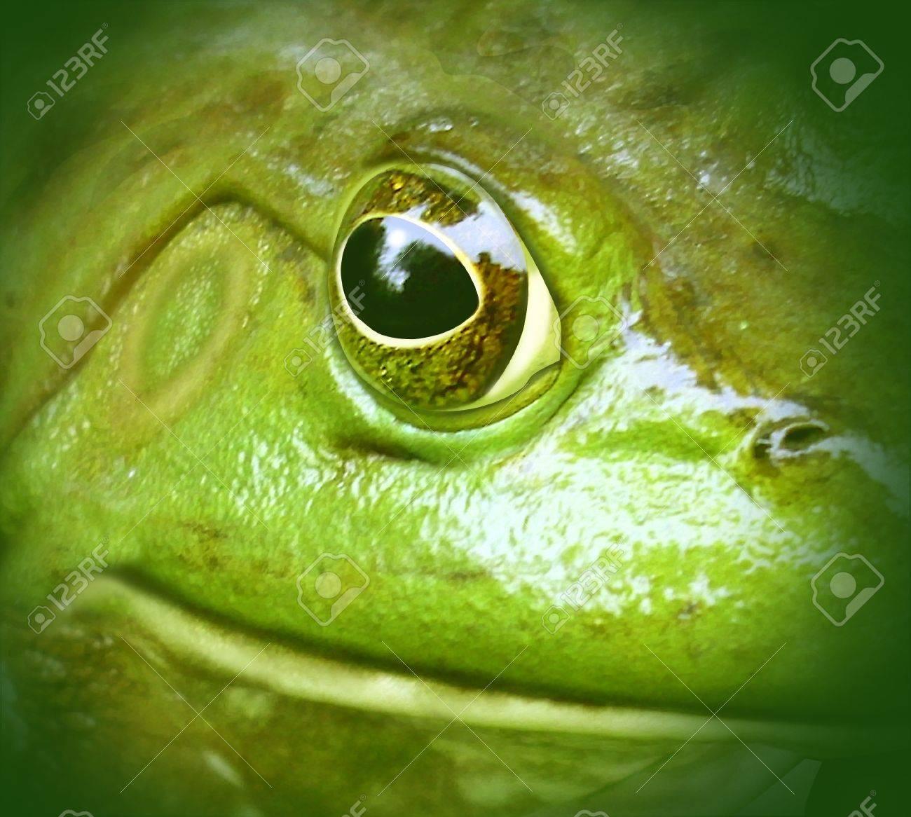 Frog green environment close up clean water nature symbol Stock Photo - 10976387