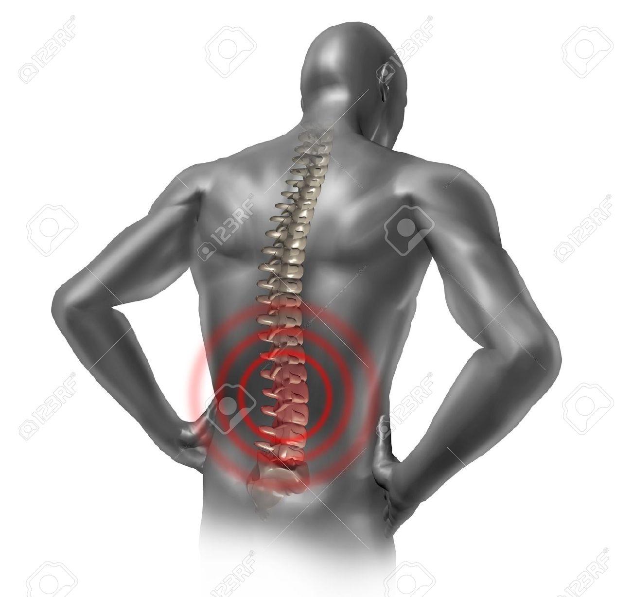 Fantástico Backbone Cuerpo Humano Ilustración - Anatomía de Las ...