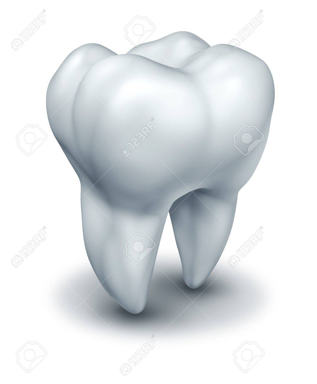 Human tooth dental symbol representing dentist medicine and dentistry surgery represented by a white single molar tooth on a white background. Stock Photo - 10976392