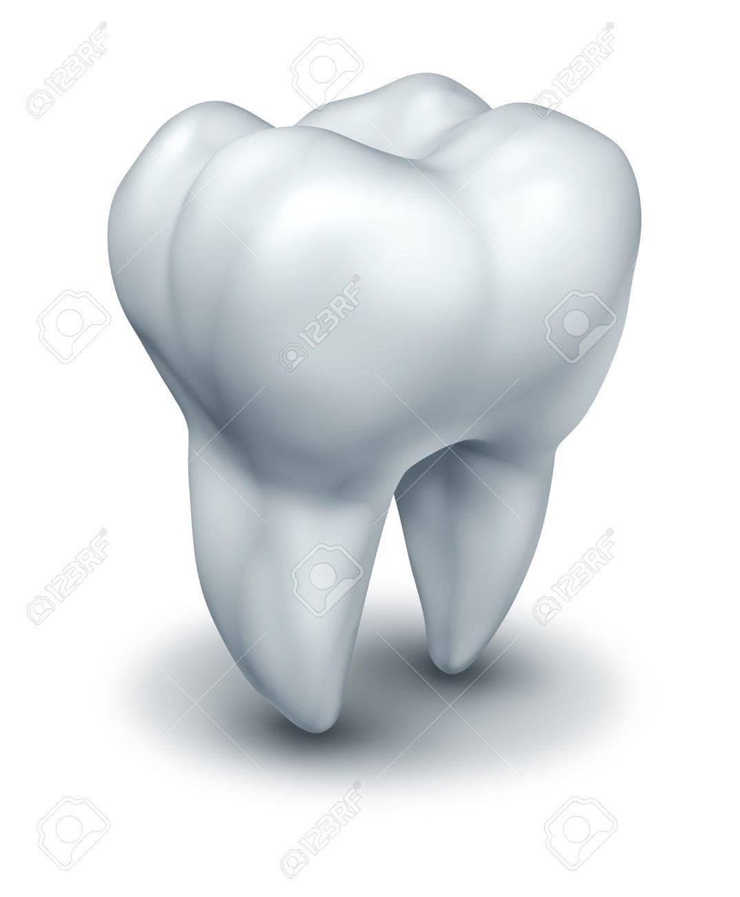 Menschliche Zahn Dental Symbol Für Zahnarzt Medizin Und Zahnmedizin ...