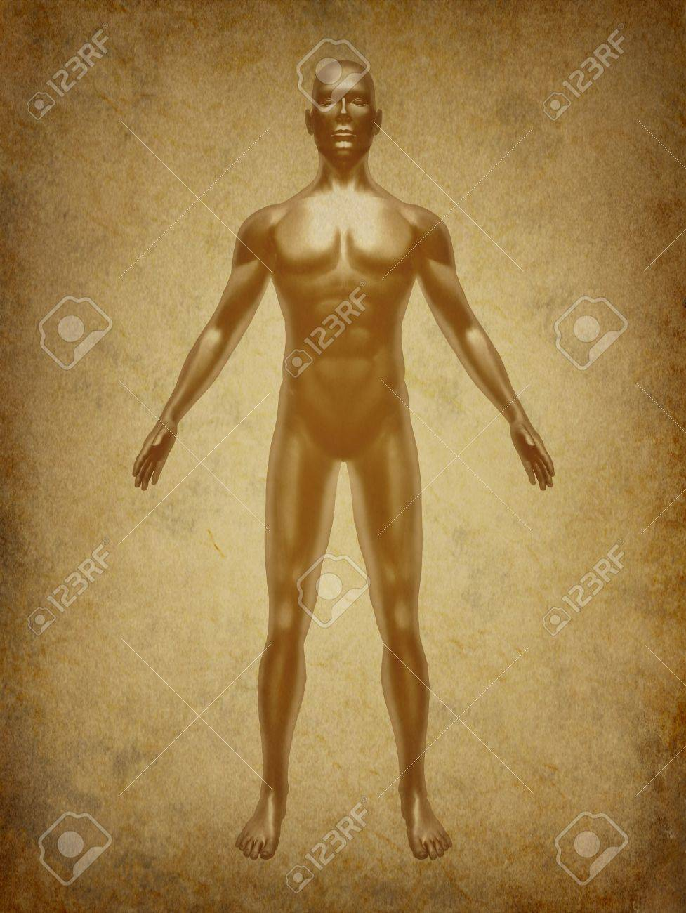 Human body medical x-ray pose chart joints muscles symbol ancient grunge old medical parchment Stock Photo - 11718570