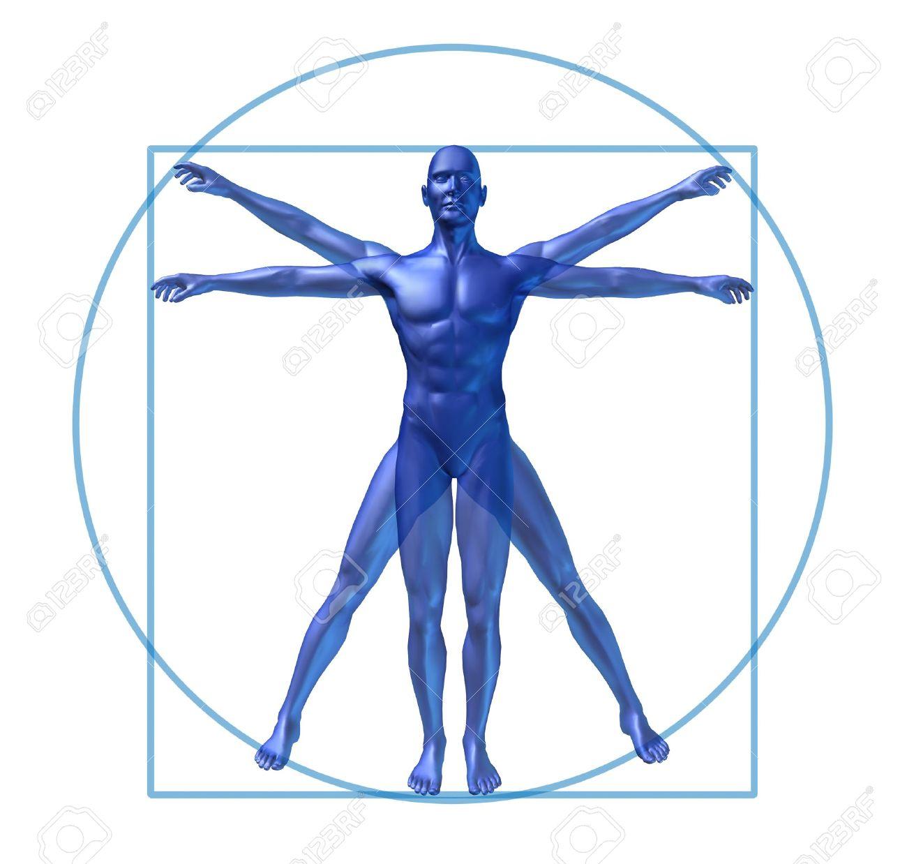 human diagram vitruvian classic man stock photo picture and  : human diagram - findchart.co