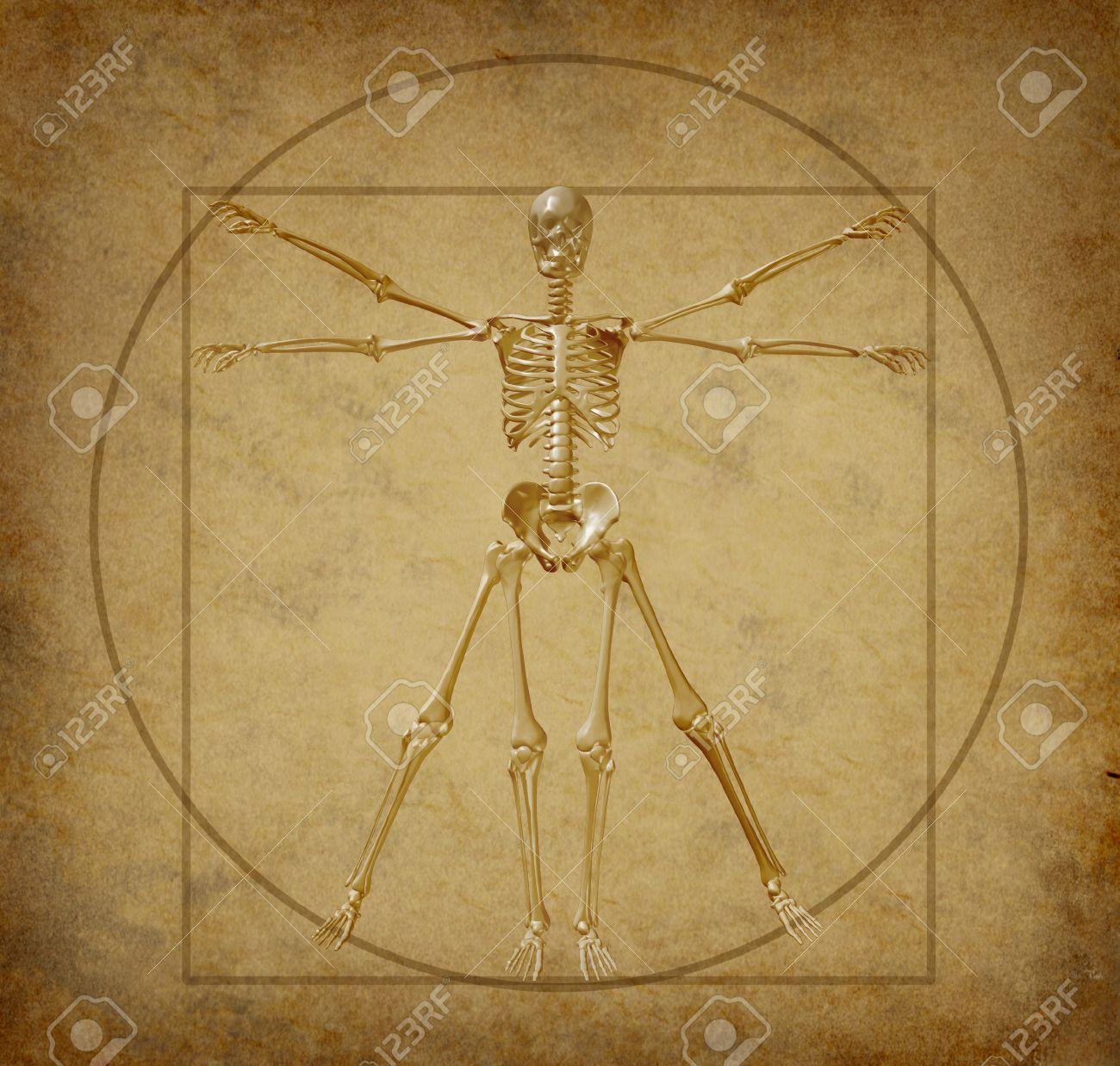 Vitruvio Diagrama De Esqueleto Humano Grunge Pergamino Médica Fotos ...