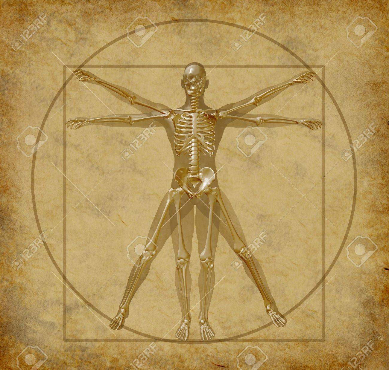 vitruvian human diagram grunge medical stock photo  picture and    stock photo   vitruvian human diagram grunge medical