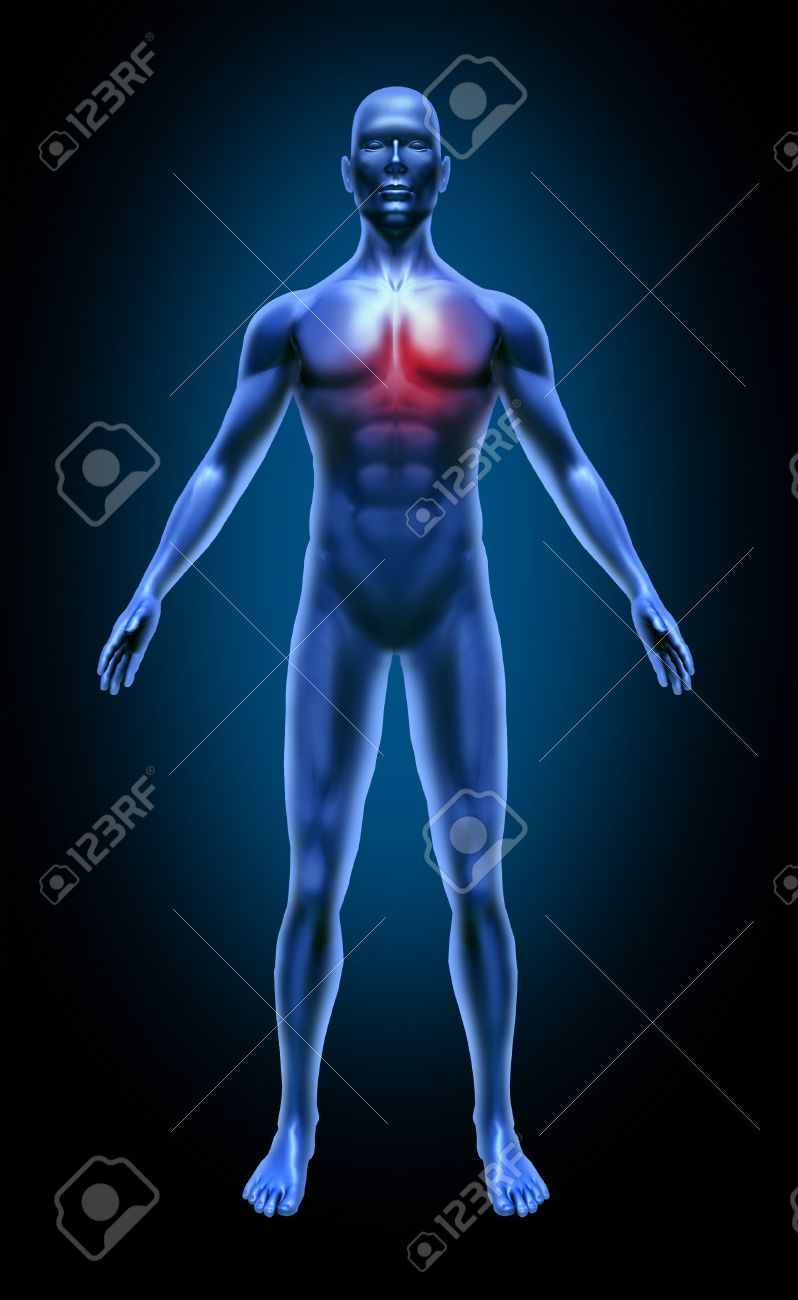 Human body heart pain stroke circulation attack cholesterol coronary medical x-ray pose joints muscles blu Stock Photo - 11570599