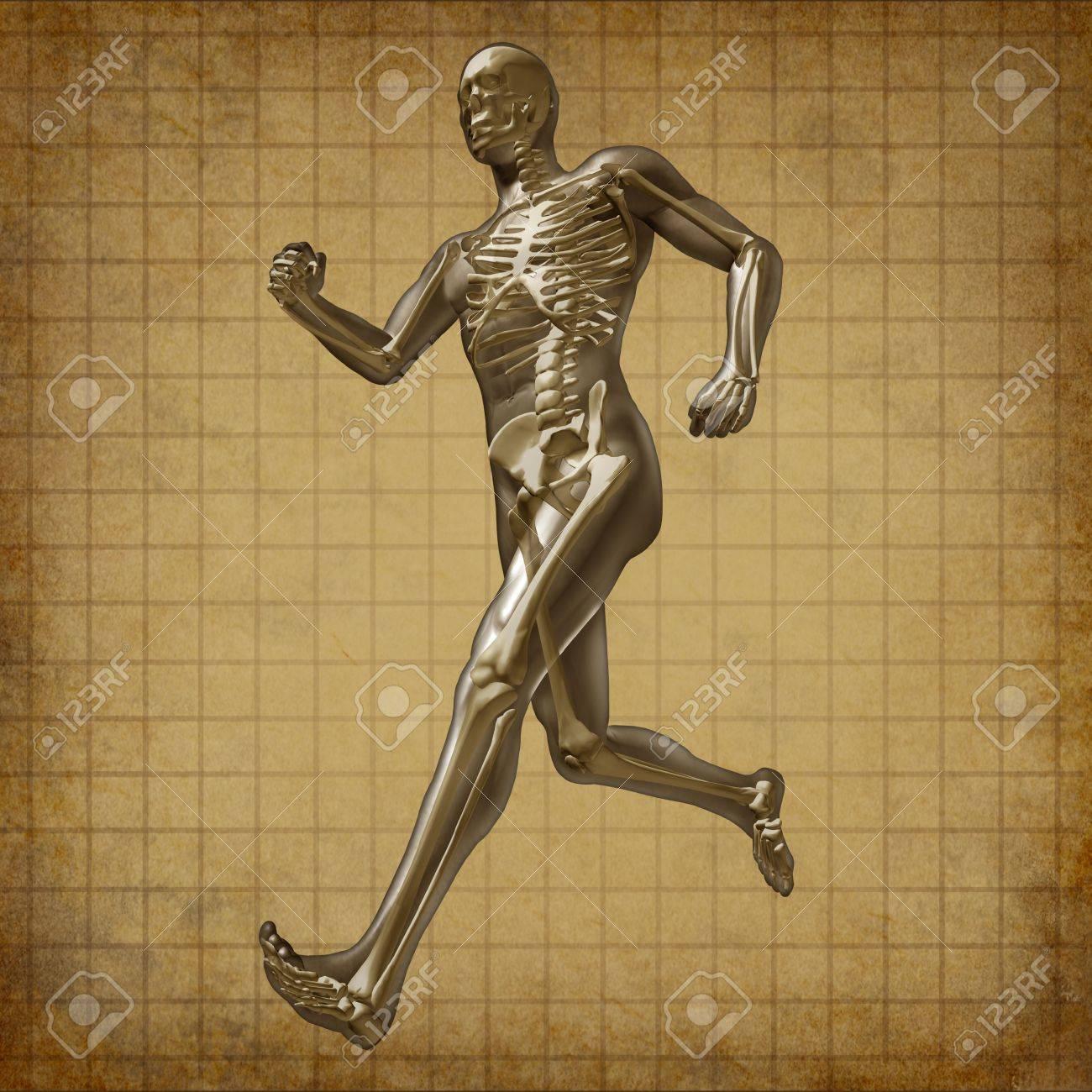 Menschliche Laufenden Mann Skelett Röntgen-visuelle Gesundheit Der ...