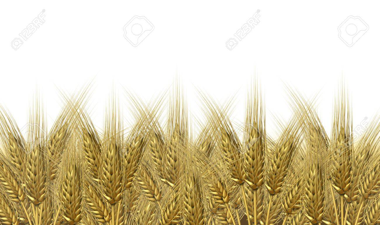 Wheat harvest on a golden horizon of harvesting grass crop as a symbol of healthy whole food for farm baked and fresh organic bakery goods as bread and cerial grains. Stock Photo - 11382068