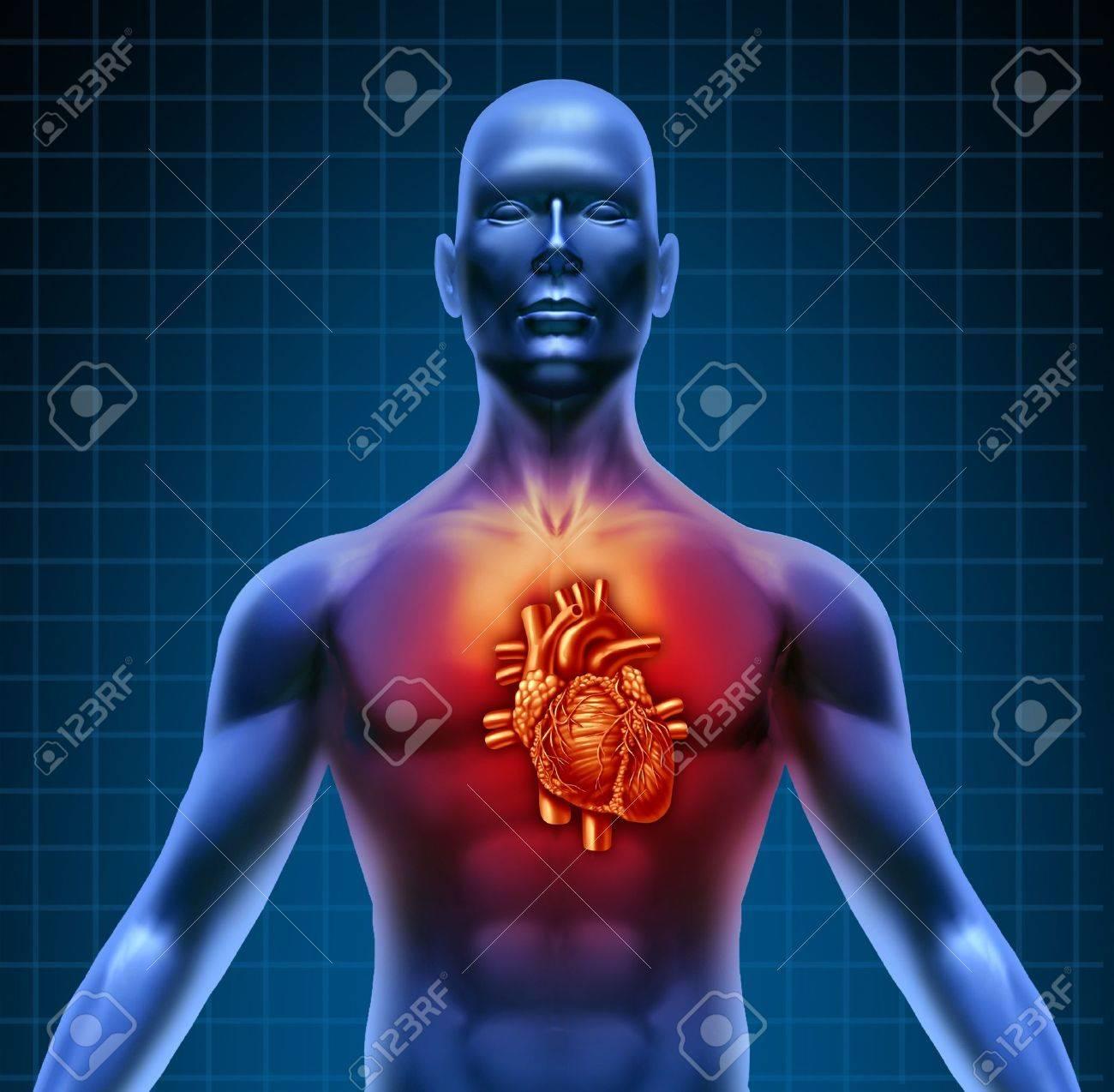 Menschlichen Torso Mit Rot Beleuchteten Hohe Herz Anatomie Von Einem ...