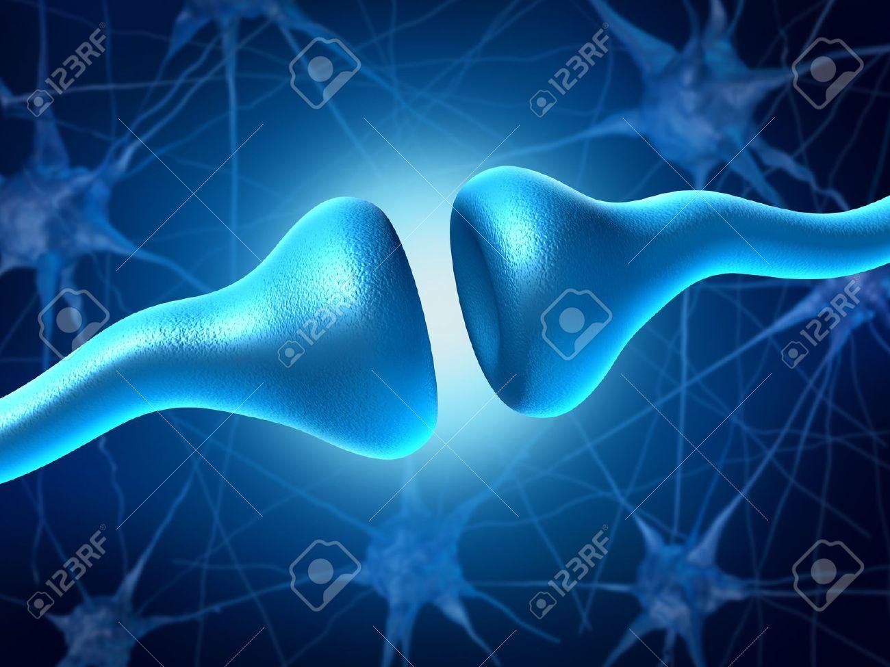 Sinapsis Y Neuronas Envían Señales Eléctricas Y Químicas De ...