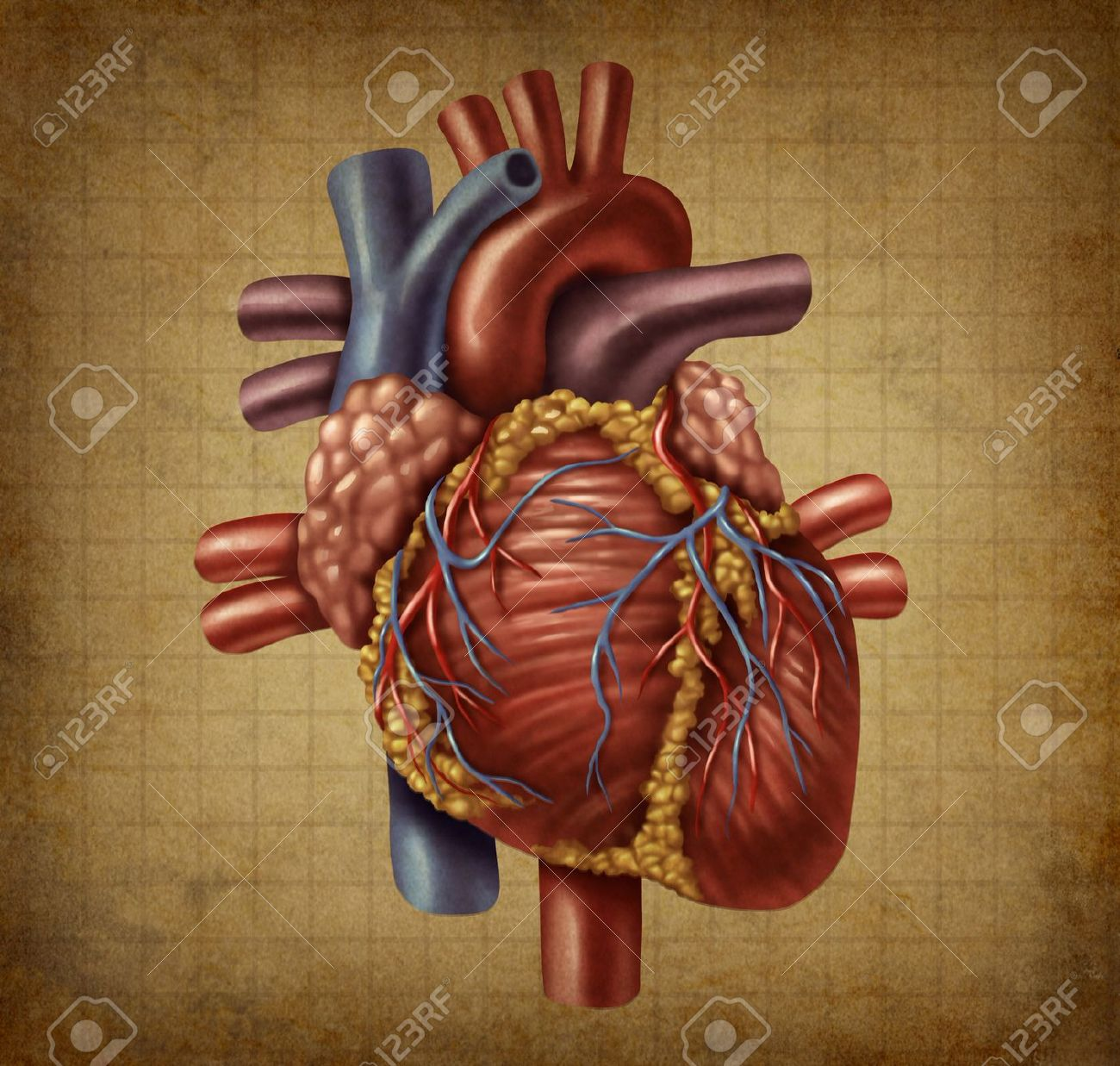 Human Heart In An Old Vintage Grunge Medical Document Texture ...