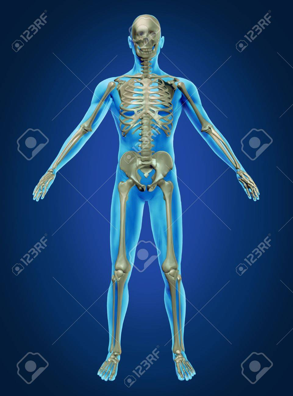 Human Body And Skeleton With The Skeletal Anatomy In A Rested