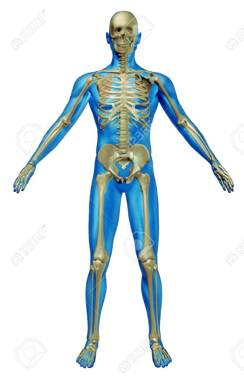 Human Skeleton And Body With The Skeletal Anatomy In A Rested