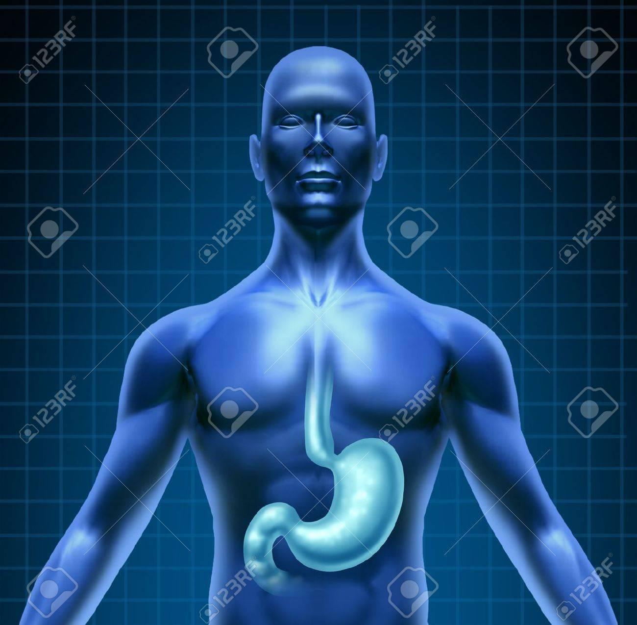 Estómago Y La Digestión Humana Con Un Diagrama De Médico De La Parte ...