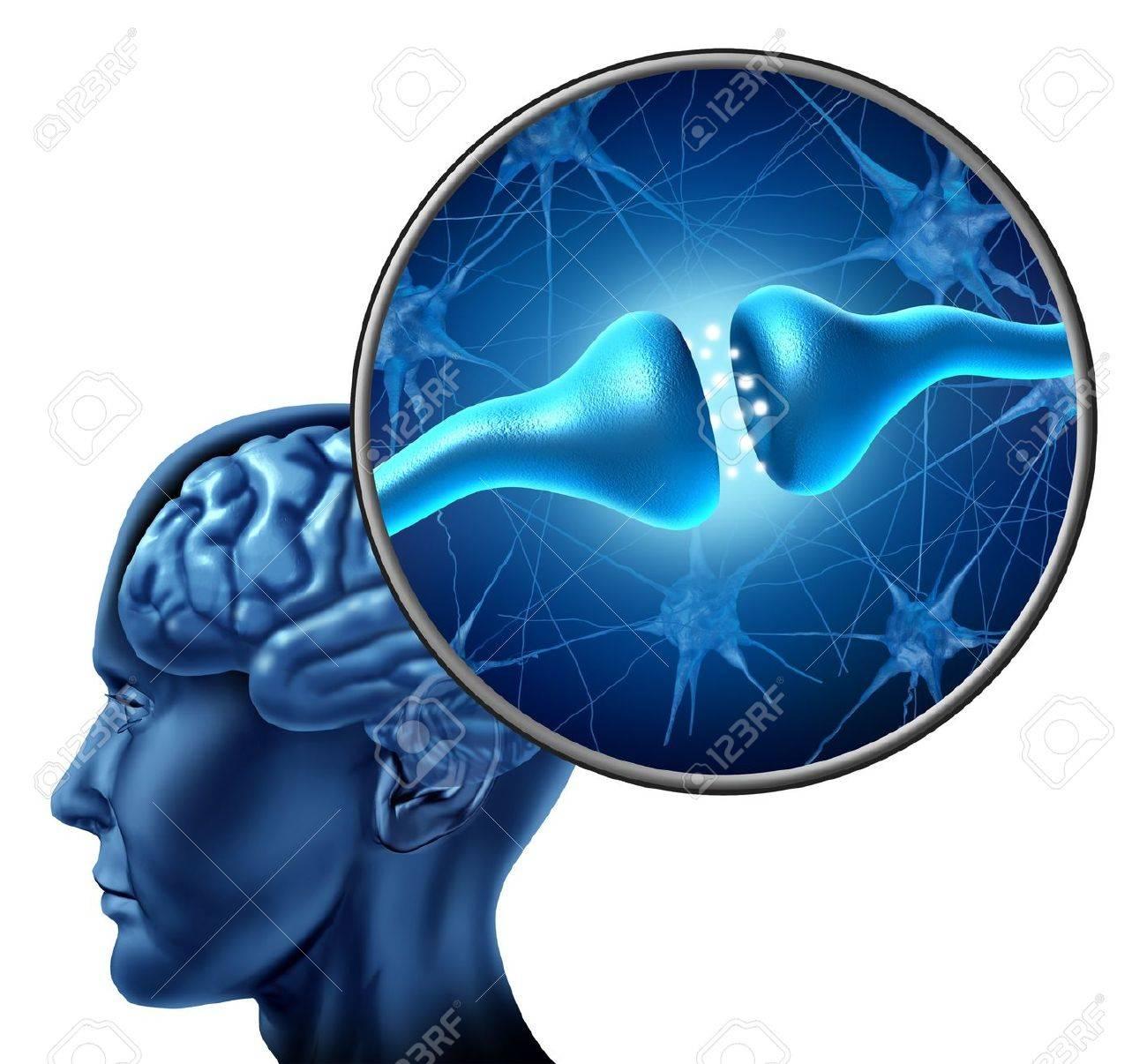 Células Nerviosas Humanas Sinapsis Del Receptor Con Una Cabeza ...