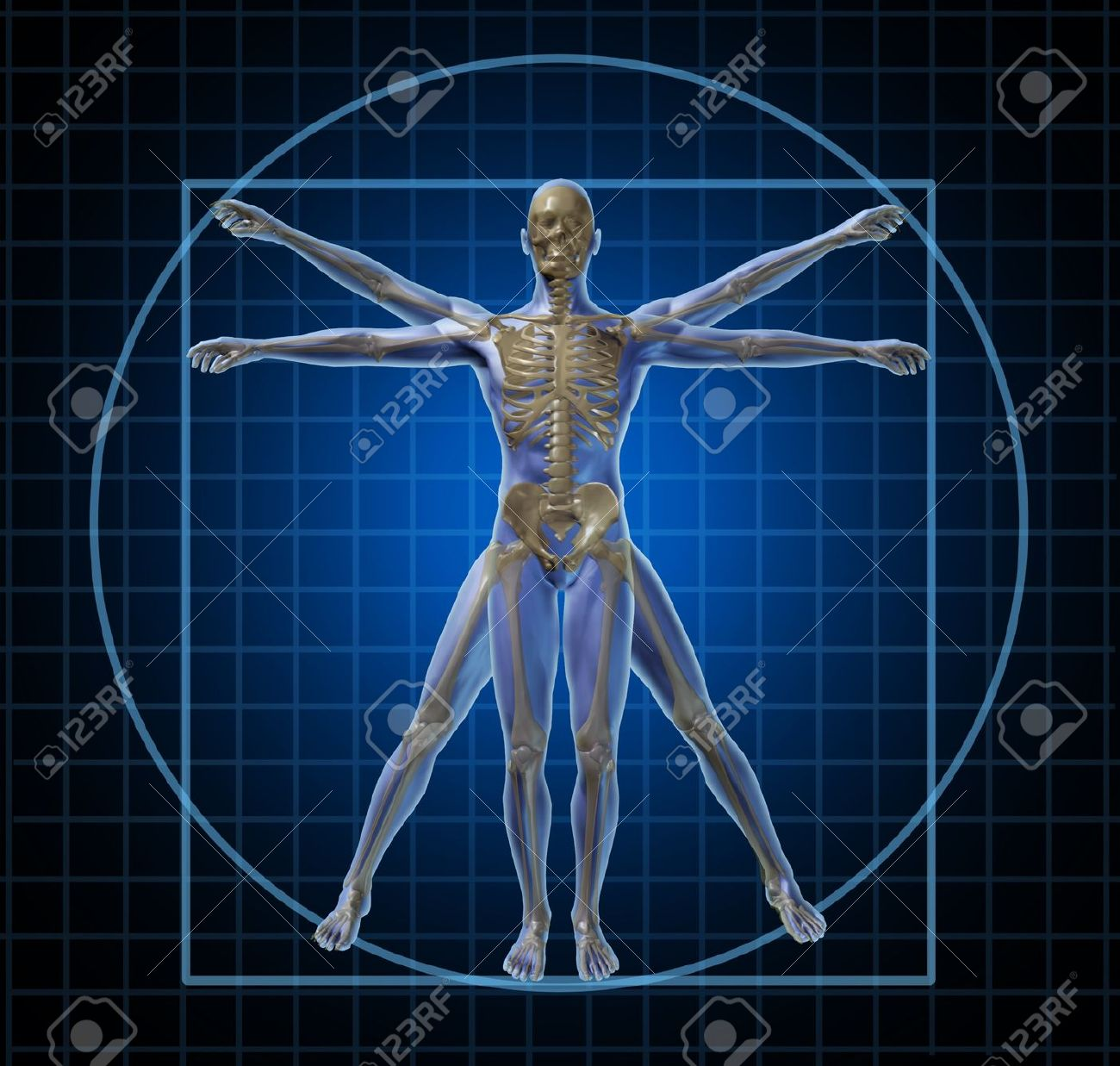 Vitruvian Human Skeleton Man And Body With As A Frontal Leonardo