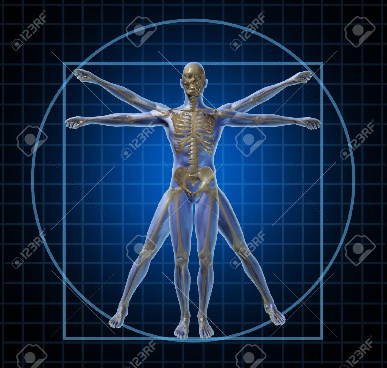 Vitruvian Menschlichen Skeletts Und Der Mensch Mit Körper Als ...