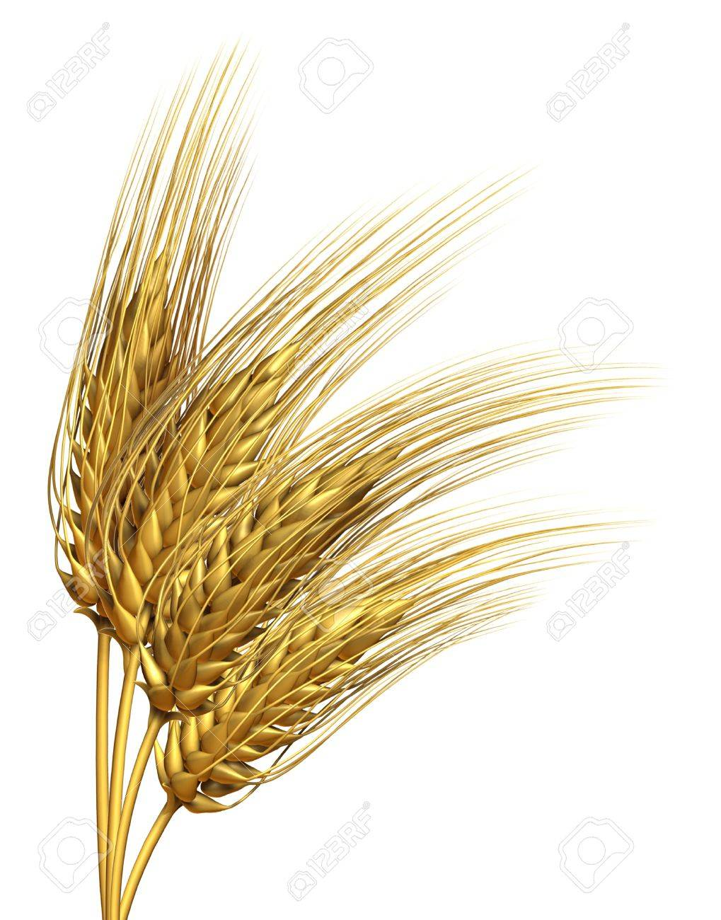 Wheat Or Barley Harvested Crop Design Element Isolated On A White Stock Photo Picture And Royalty Free Image Image 14118894