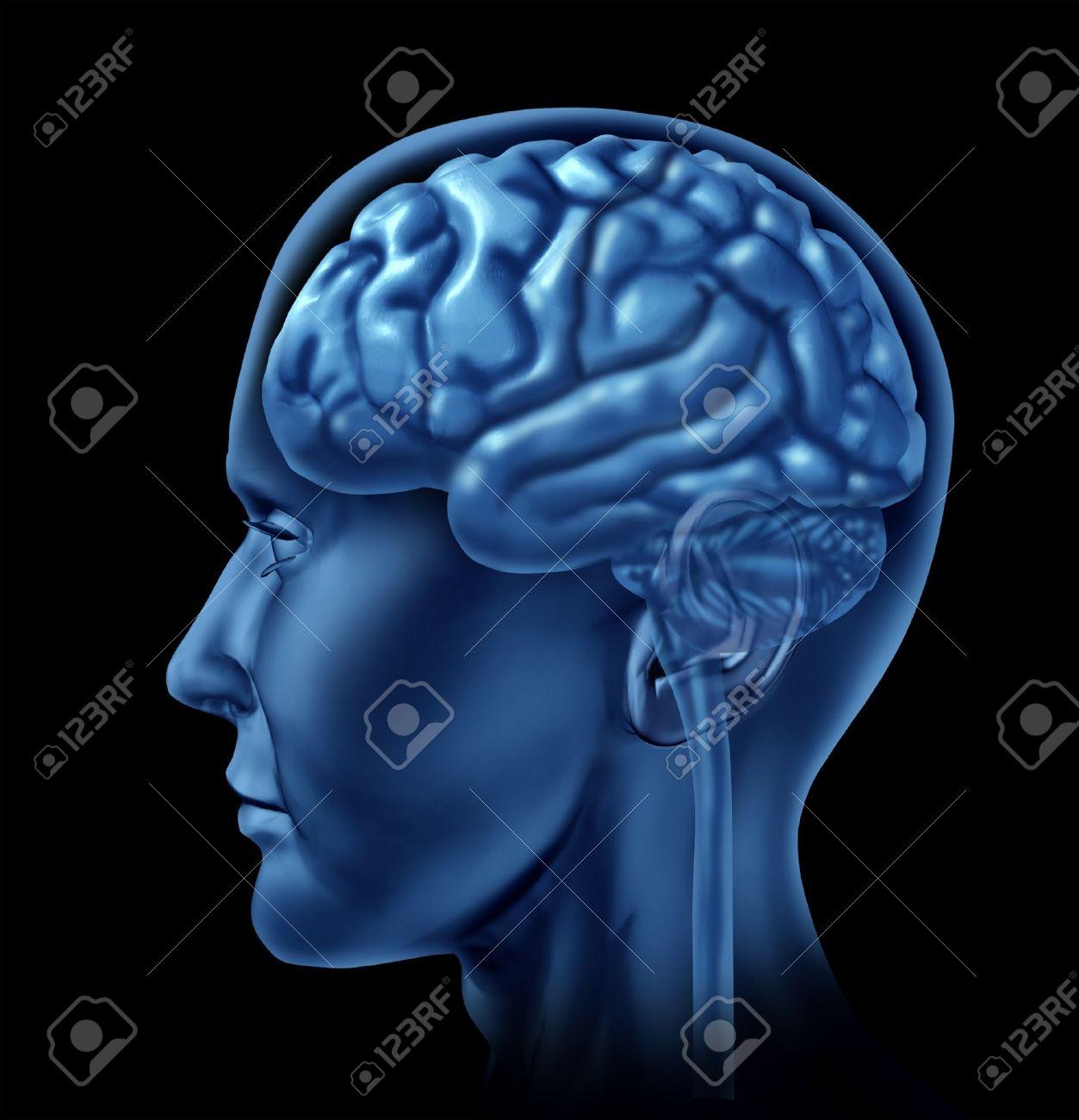 El Cerebro Humano Como Una Vista Lateral Del órgano Neurológico ...
