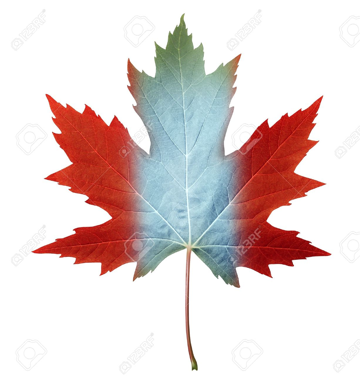 canada maple leaf with the canadian flag colors painted on the