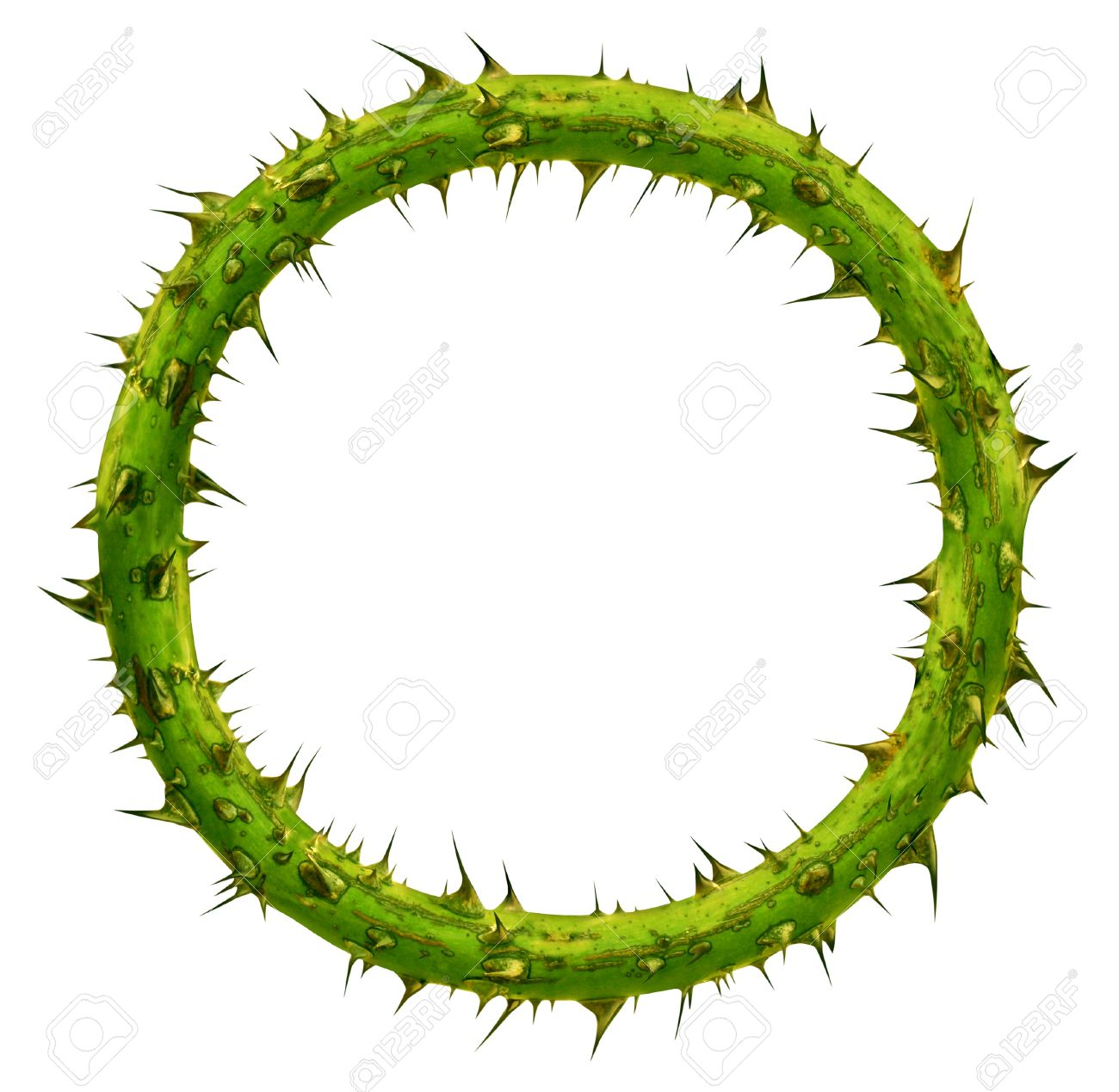 Crown of thorns as a circular plant branch frame with a blank area with pointy needles as a symbol of sacrifice and courage isolated on a white background Stock Photo - 15206263