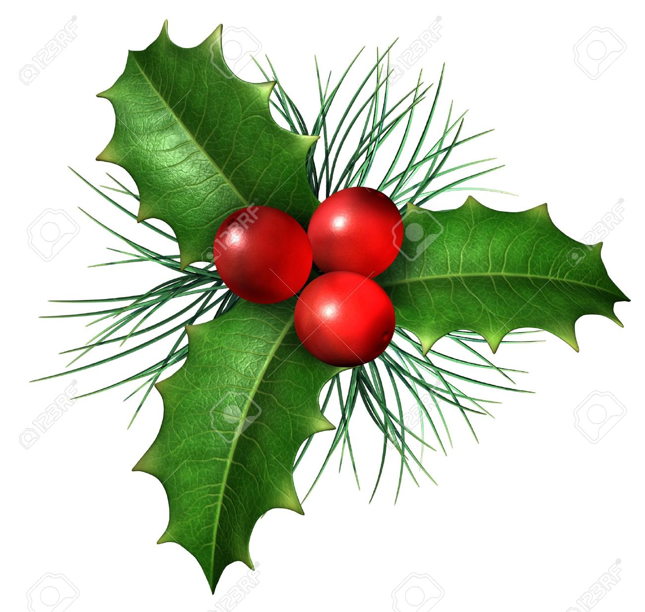 christmas holly images