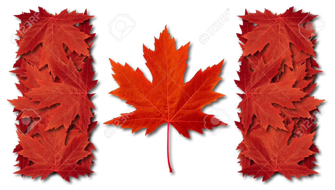 maple leaf stock photos u0026 pictures royalty free maple leaf images