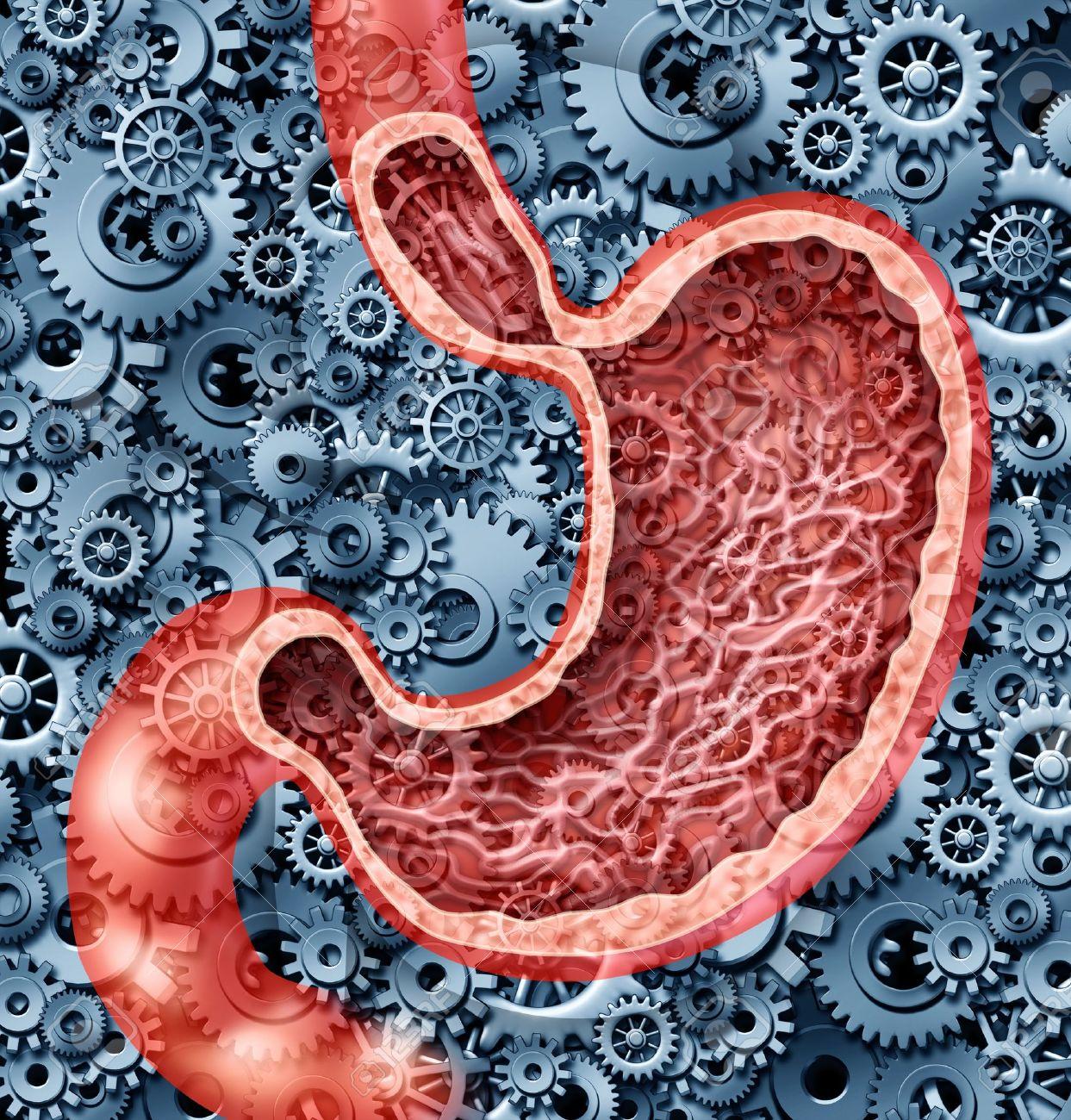 Función De La Digestión Humana Como Una Anatomía Del Estómago Del ...