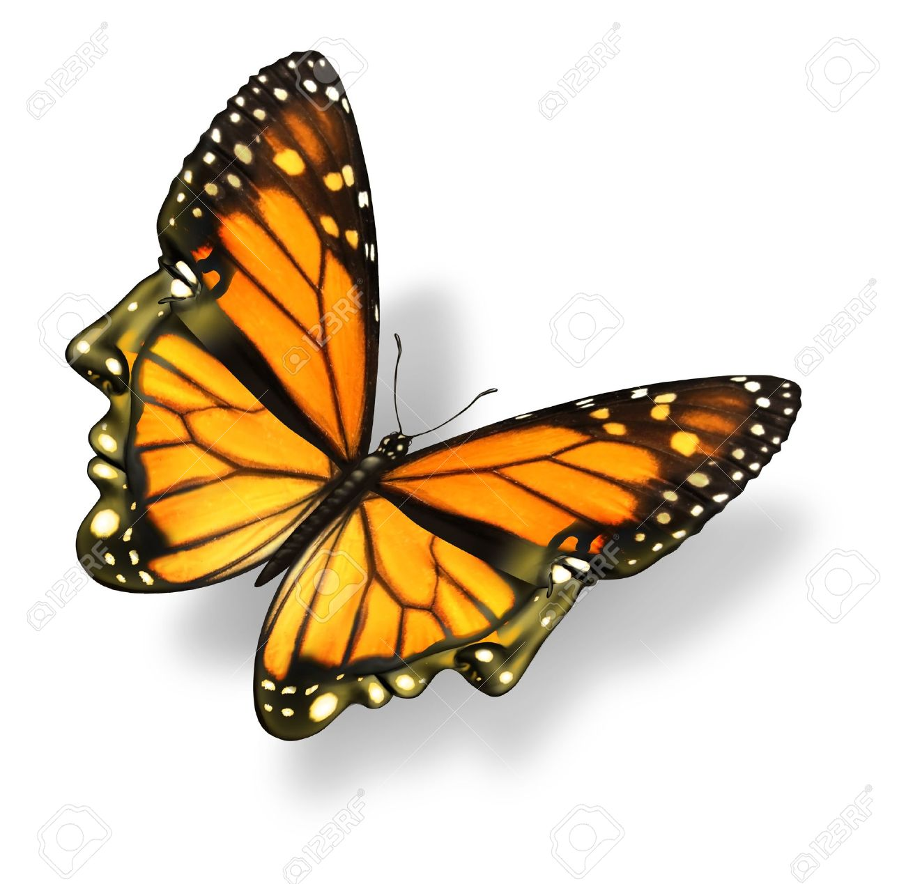 butterfly spread wings images u0026 stock pictures royalty free