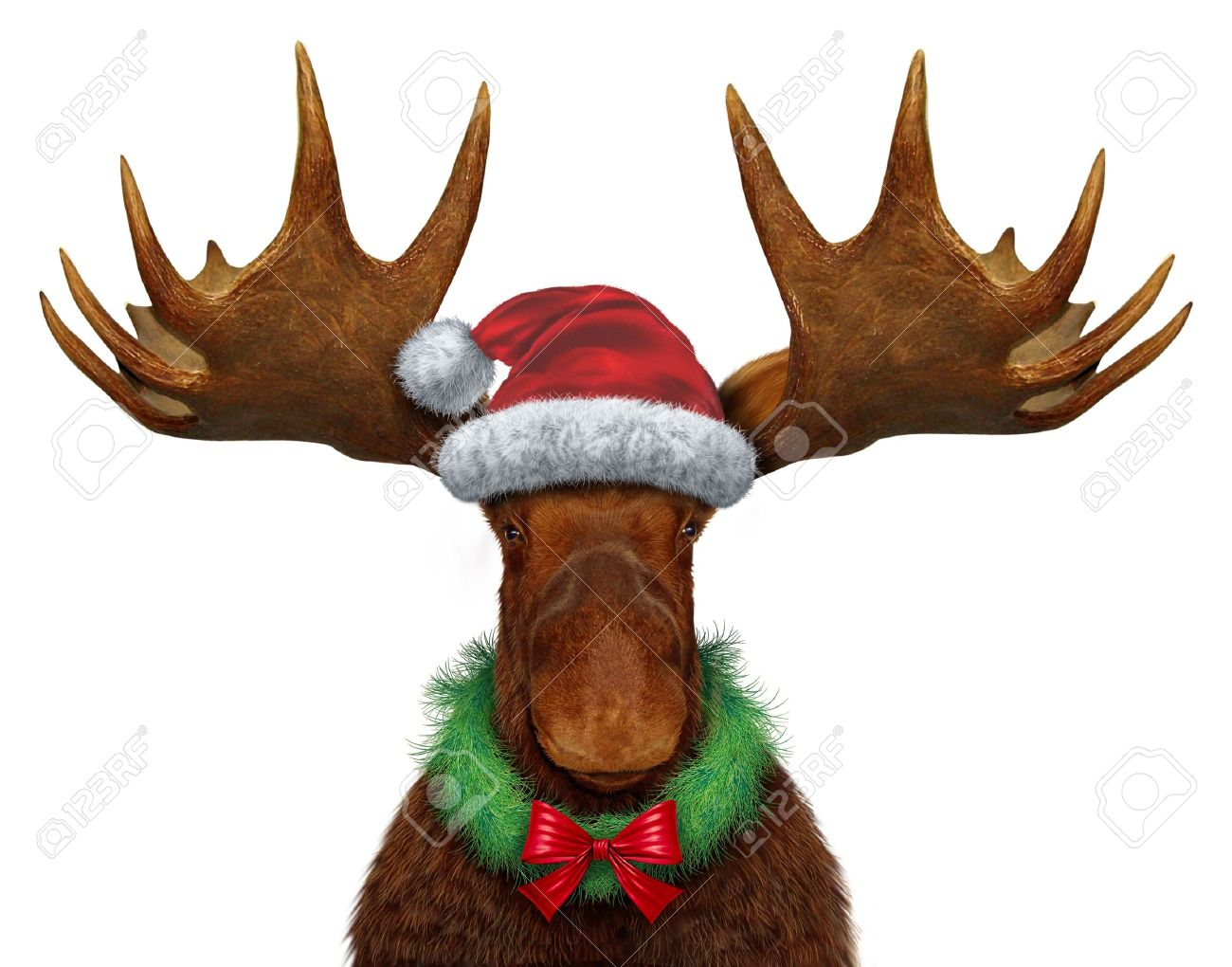christmas moose with santa clause hat and a holiday wreath with a red silk bow stock - Christmas Moose