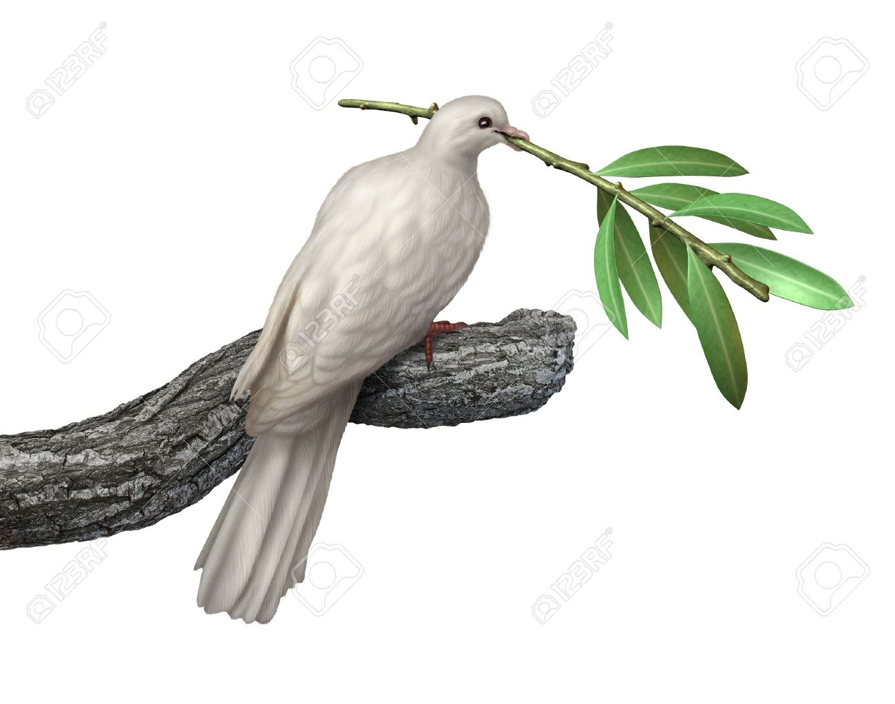 Dove holding an olive branch isolated on a white background as a symbol of peace and tranquility and hope for the future of humanity on the journey for human rights and freedom - 17127590