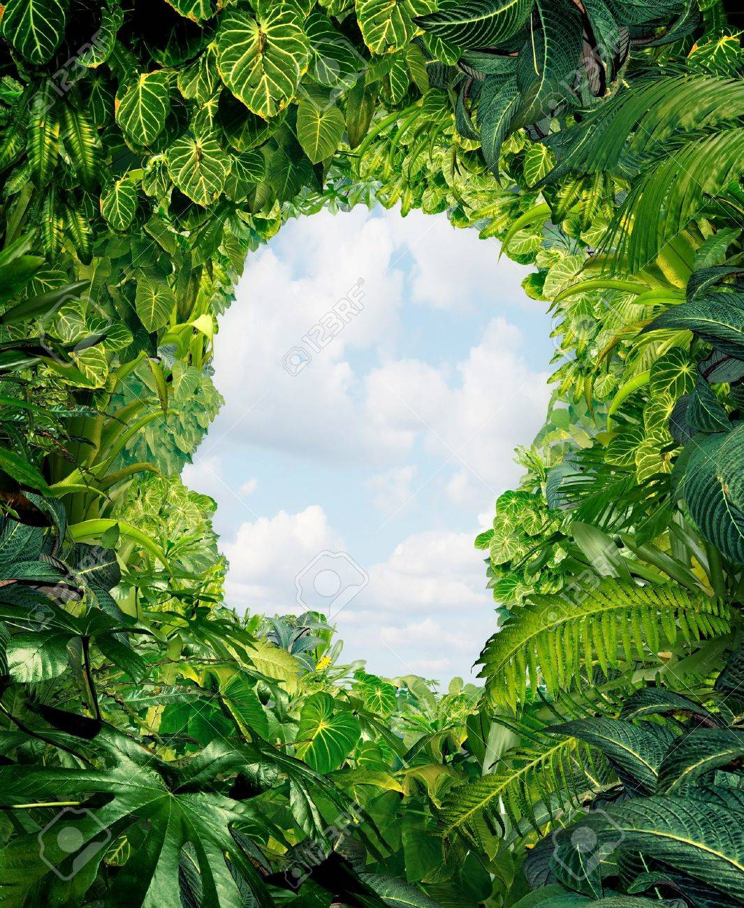 Find your way out from the dark danger of the jungle of uncertainty and confusion with rainforest plants in the shape of a human head leading to an open sky of freedom Stock Photo - 17229344
