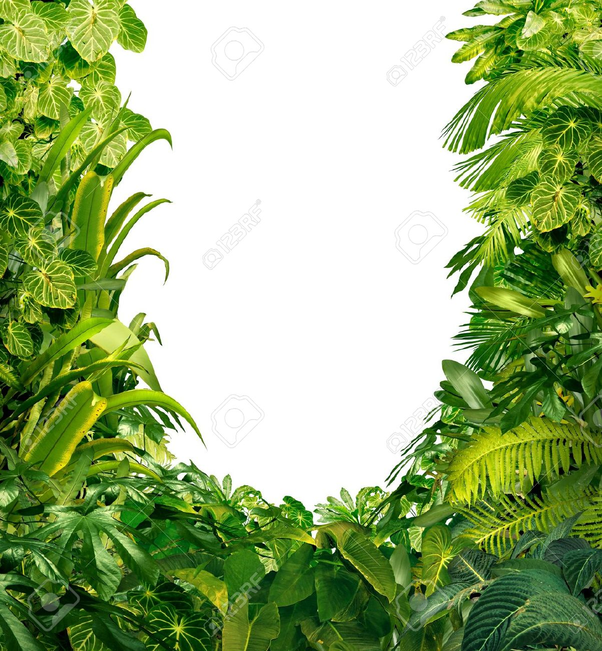 Tropical jungle as a blank frame with rich green plants as ferns and palm tree leaves found in southern hot climates as south America  Hawaii and Asia with a white isolated copy space center Stock Photo - 17229340