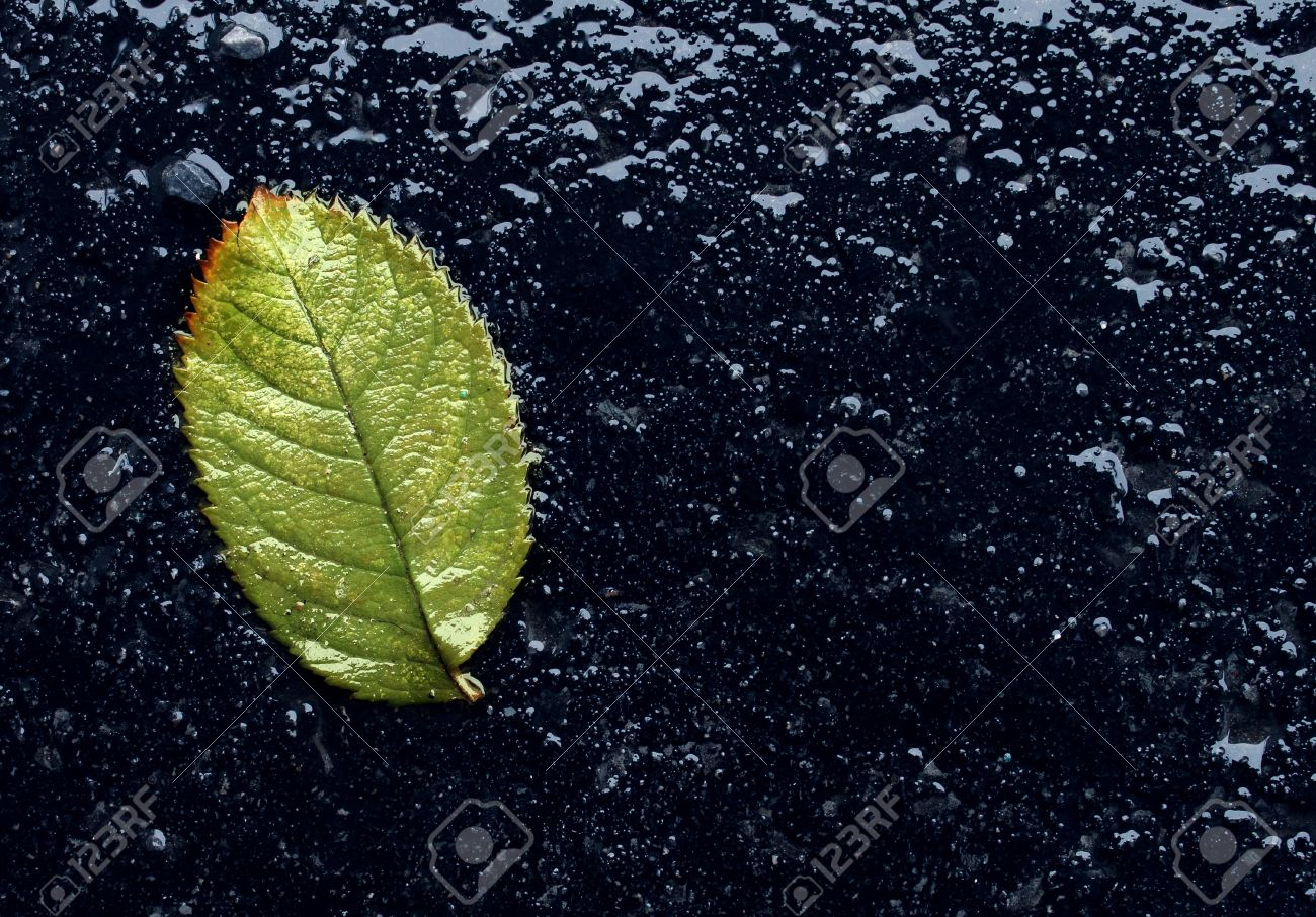 Wet Single Fallen Green Leaf On Black Asphalt As A Symbol Of Stock