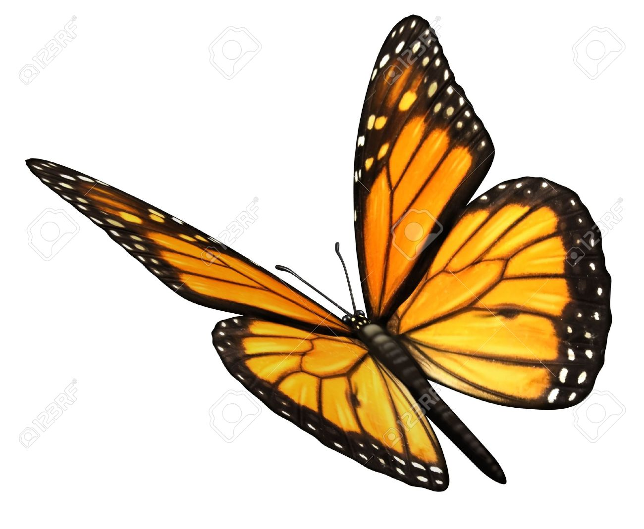free butterfly images
